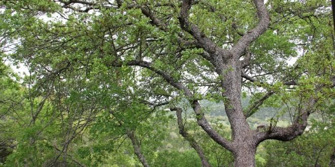 View From Patio - 6000 Shepherd Mountain Cv #708 (2)