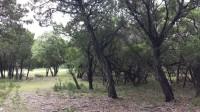 17509 Regatta View Dr - The Hollows (6)